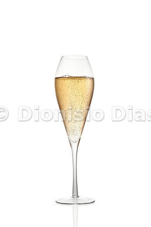 Tulip Champagne Cup, isolated on white background
