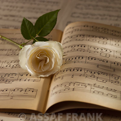 Rose on musical notes book