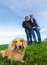 Tan Dachshund Sitting on Grass with Couple in Background