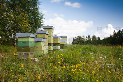 Honey Bee Apiary