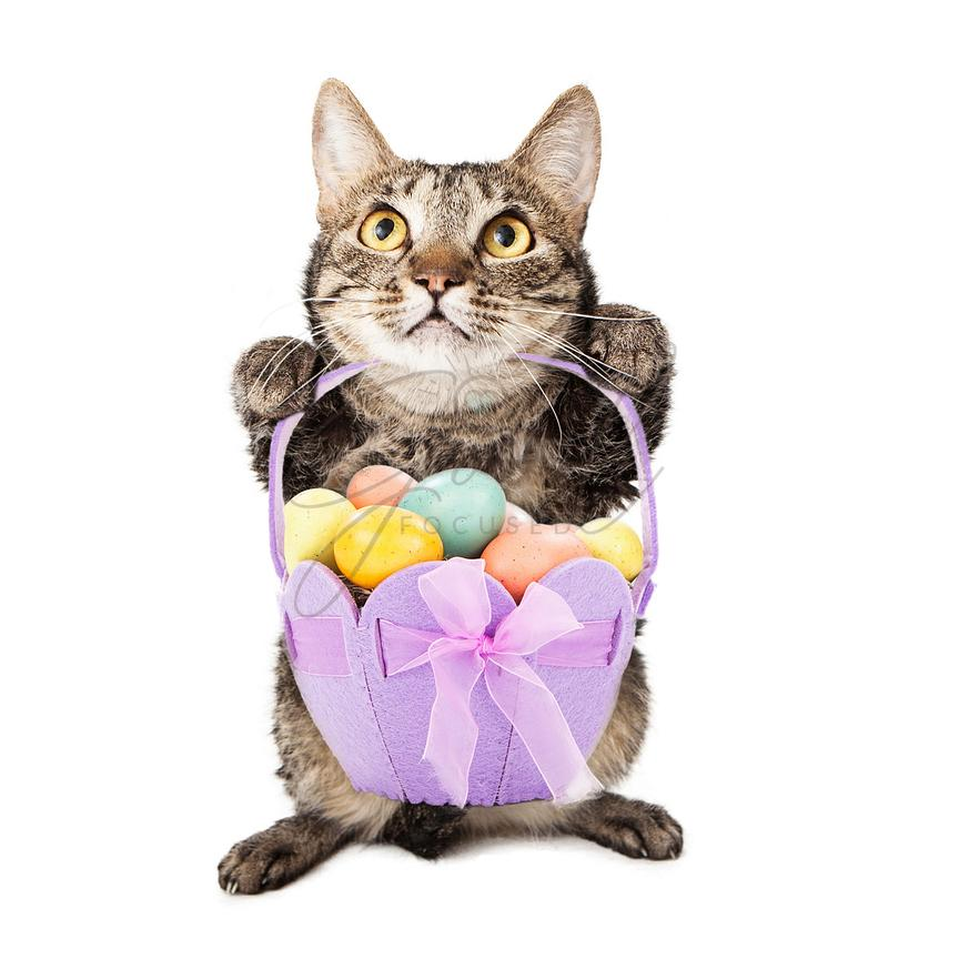 Cat Holding Easter Basket