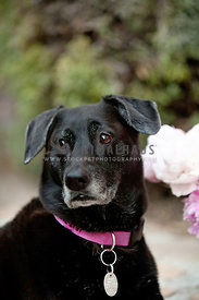 Anxious-Distracted-Black-Dog-Outdoors-by-Flowers-Greenery