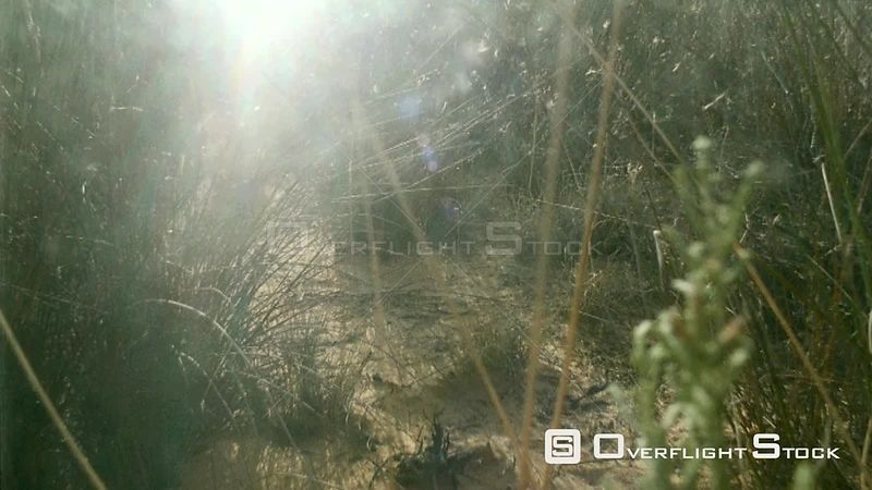 Close up grass and desert sand with glare from sun and lens flare Botswana