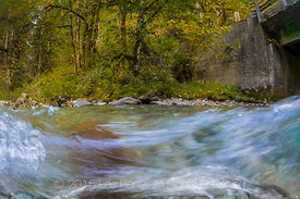 Rapids along the Dungeness River in Olympic National Forest