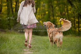 golden retreiver walking with girl