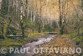 Tillamook Forest Profile 3 by Paul Ottaviano