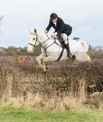 Jumping a hedge at Eaton Grange. The Belvoir Hunt at Eaton Grange 7/2
