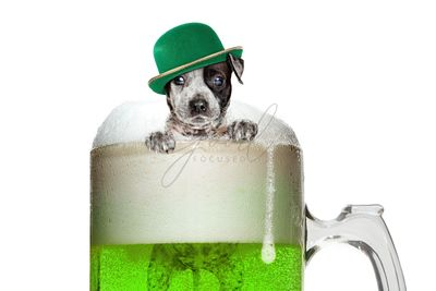 Puppy Dog in St Patricks Day Green Beer