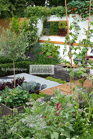 Allotment, Contemporary garden, garden designer, mangetout, Mini potager, Mini Vegetable garden, Olive tree, Small garden, Ur...