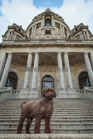 Poodle by Ashton Memorial