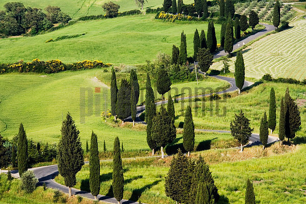 Italy, Tuscany, Monticchiello, Cypress tree lined road, elevated view