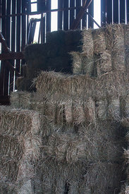 square hay bales