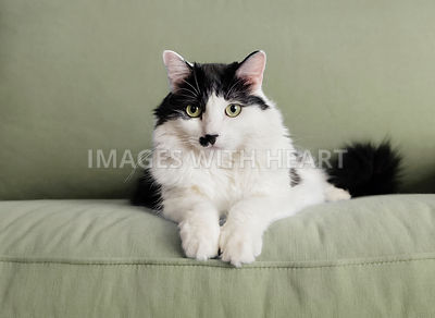 Black and white cat on a green couch
