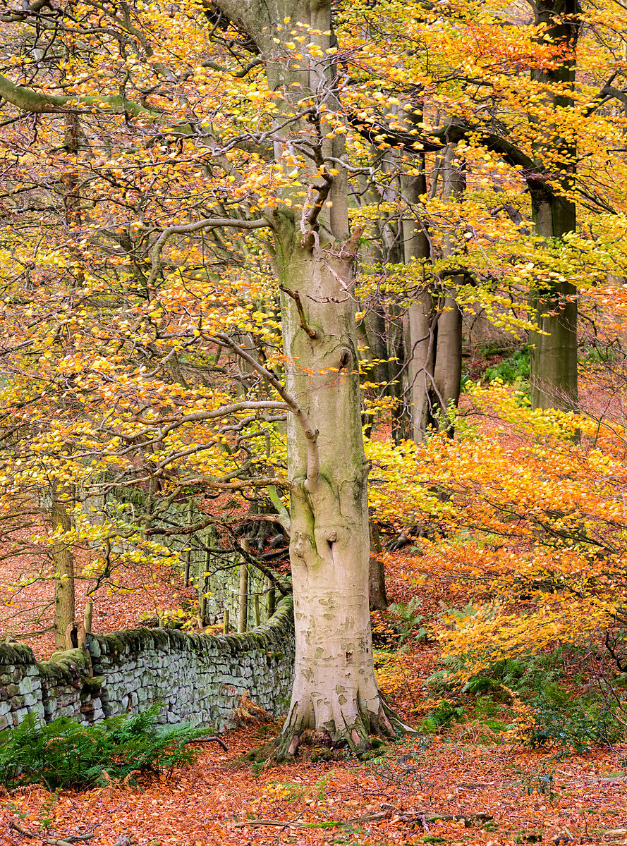 Autumn in the Peak District Peak District autumn photos