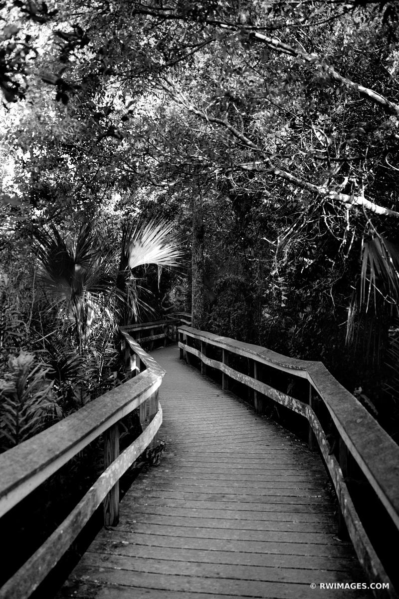 MAHOGANY HAMMOCK BOARDWALK TRAIL EVERGLADES NATIONAL PARK FLORIDA BLACK AND WHITE
