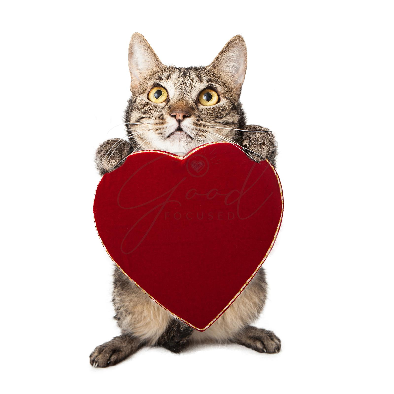 Cat Holding Red Heart