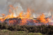 Heather burning on a Grouse Moor in the Yorkshire Dales, UK.
