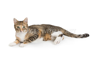 Pretty Young Cat Lying to Side Looking Forward
