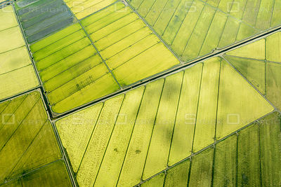 Rice Field Patterns in the Sacramento Valley, California.