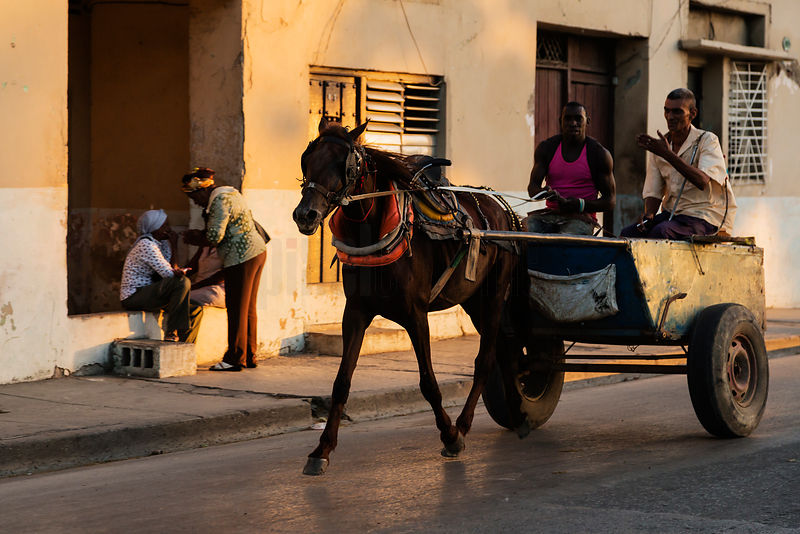 Horse and Cart in the Street at Sunset
