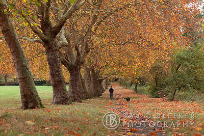Autumn at Primrose Hill, London