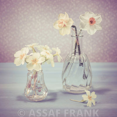 Daffodil and Primrose flowers in a glass bottle
