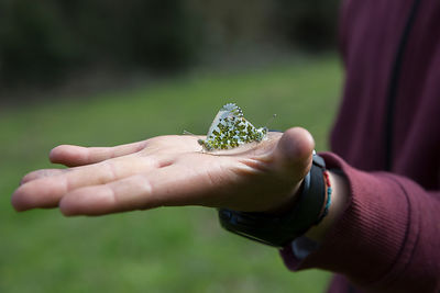 Zita, 10 ans, montrant dans sa main l'accouplement de 2 papillons, France / Zita, 10, showing in her hand the mating of 2 but...