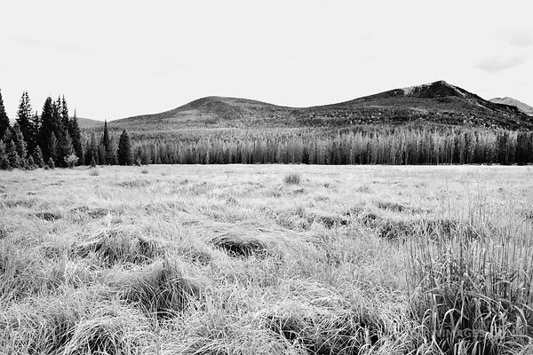 MEADOW KAWUNEECHE VALLEY ROCKY MOUNTAIN NATIONAL PARK COLORADO BLACK AND WHITE