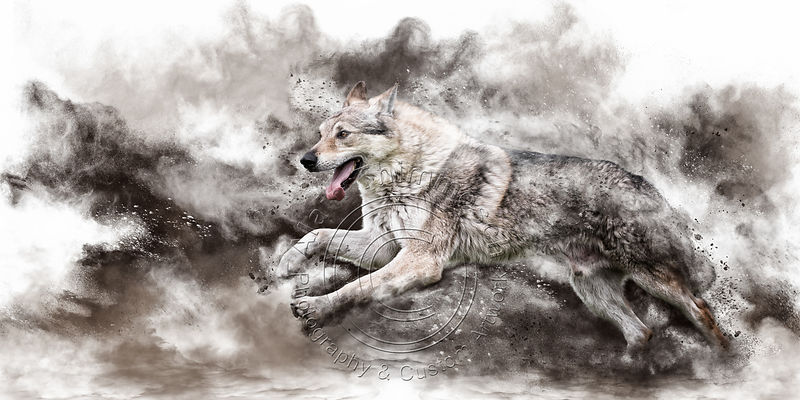 Art-Digital-Alain-Thimmesch-Chien-128