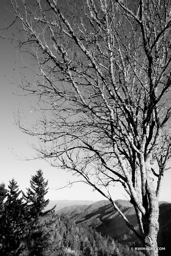 NEWFOUND GAP SMOKY MOUNTAINS BLACK AND WHITE VERTICAL