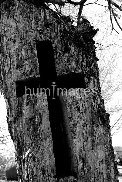 Cross carved into a stump of a tree (black and white)