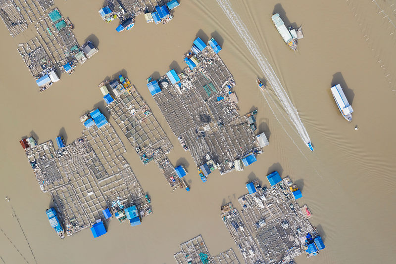 Aerial View of a Fishing Community at the Tidal Mudflats from the Yantian Bridge