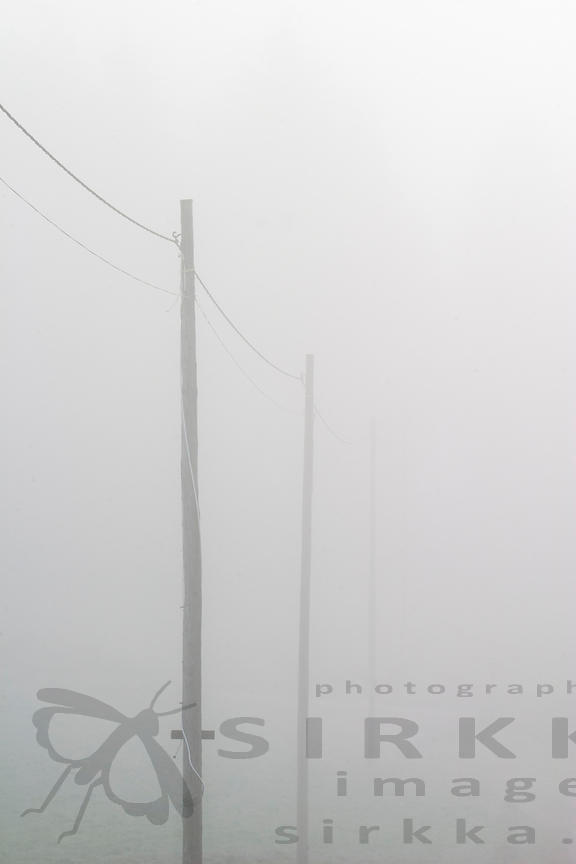 Power & telephone line in the fog