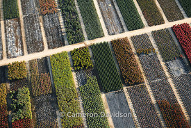 Aerial of a greenhouse garden