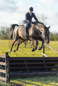 Nicky Hanbury jumping a fence at Cream Gorse - The Quorn at Cream Gorse Farm
