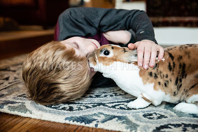 Mini Rex Rabbit Grooming/Licking Kid
