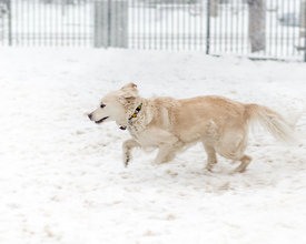 CircleSnowDogs-20150305-002