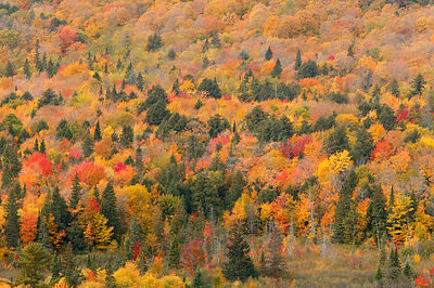 Aerial view of  mixed deciduous and coniferous trees in early autumn, Porcupine Mountains State Park, Upper Peninsula, Michig...