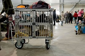 Hond in een kooi tijdens hondenshow | Dog in a cage during dogshow
