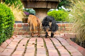 two dogs peering into a fountain