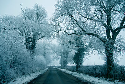 An atmospheric image of hoar frost covered trees and hedgerow down an empty road, in winter.