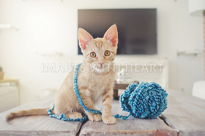 Orange cat wrapped in blue yarn
