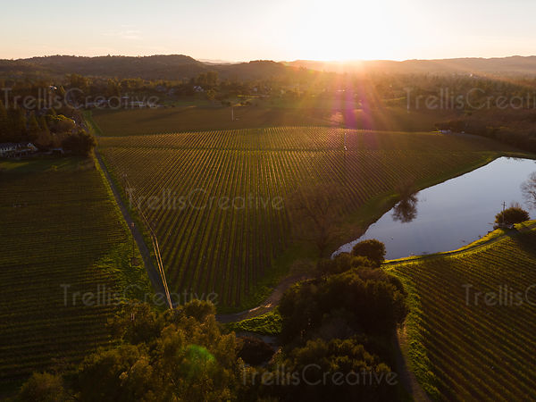 Aerial view of vineyard field and lake at sunset
