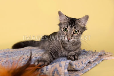 Cat laying on rug reaching for feathers