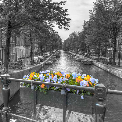 Flowers on the bridge railing over canal, Amsterdam