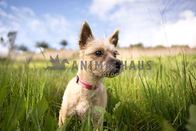 small dog standing in the tall grass close up