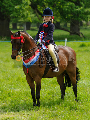 Championship 6 - BSPS Anglo and Part Bred Arab Championship photos