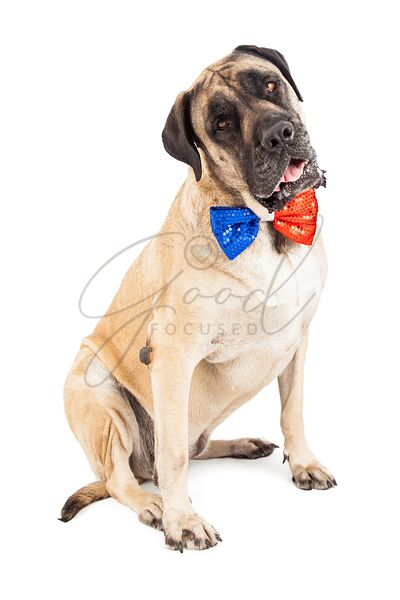 Mastiff Dog Red and Blue Festive Tie