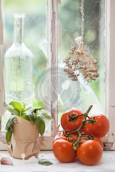 Basil and tomatoes on the windowsill