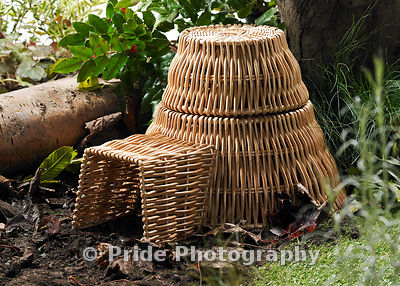 Hedgehog_House_1